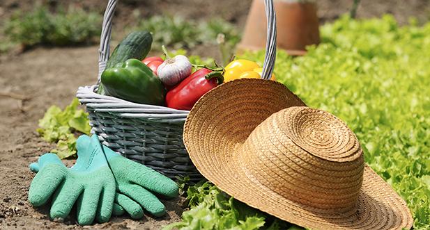 basket of fresh organic vegetables