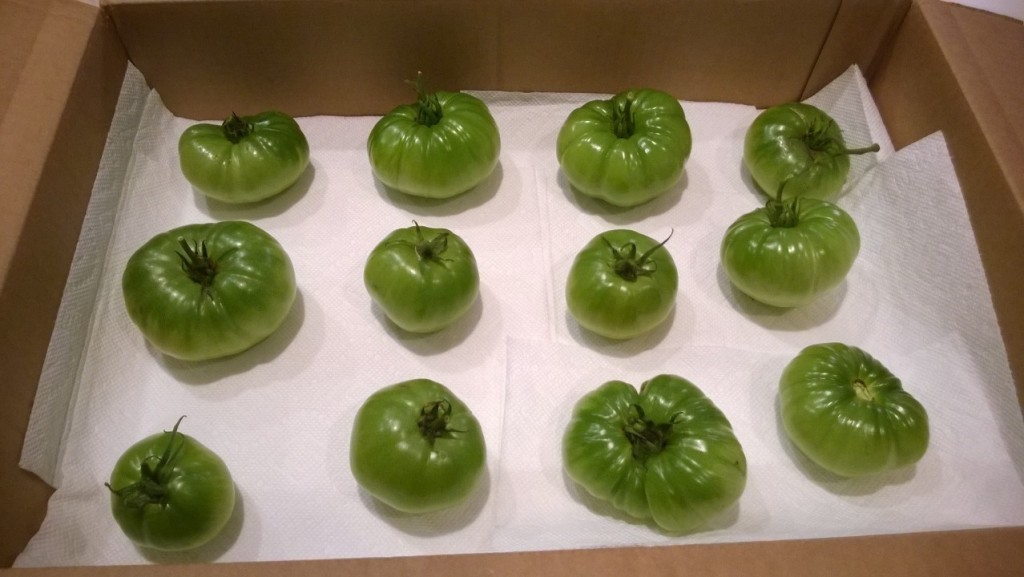 Green tomatoes in a box