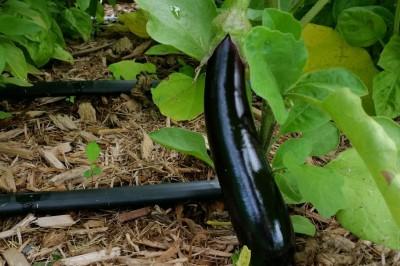 Yard2Kitchen raised bed garden