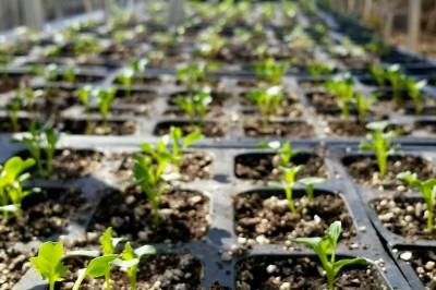 Yard2Kitchen organic seedlings