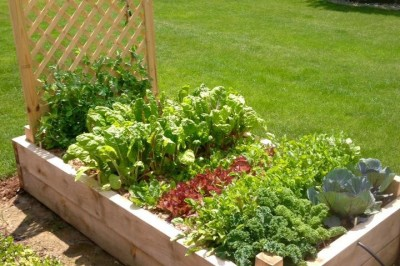 Yard2Kitchen bountiful organic garden is ready to harvest