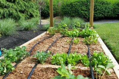Yard2Kitchen custom organic raised bed garden