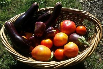 Yard2Kitchen garden harvest