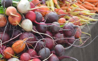 Springing from the Roots…an Edible Rainbow!