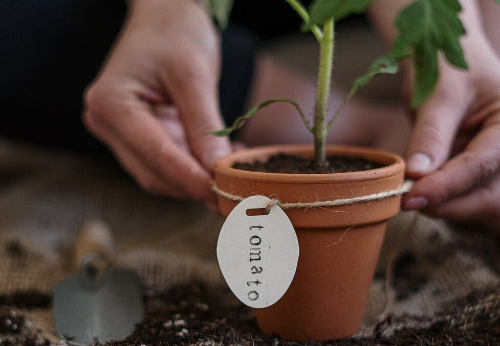 Gardening with Joint Pain