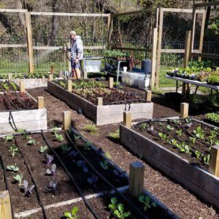 Happy 5-5-2020 Grow your own Salsa ingredients!Gardens at apartments in Short Hills, Nj #raisedgardenbeds #healthylifestyle #organicgardening #gardening