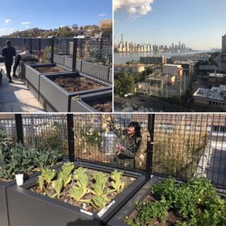 Did you know that we also install and maintain gardens at commercial properties. This is one in Jersey City Nj #raisedgardenbeds #healthylifestyle #gardening #officegarden